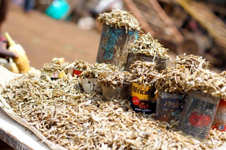 omena in the market.jpg