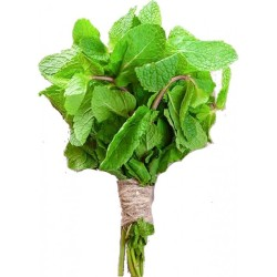 fresh-mint-leaves-1-bunch